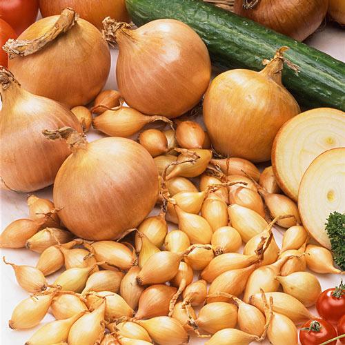 Sturon Onion Set