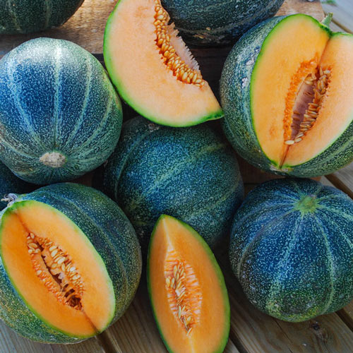 Petit Gris de Rennes Melon Seed