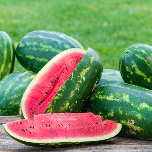 Sangria Hybrid Watermelon Seed
