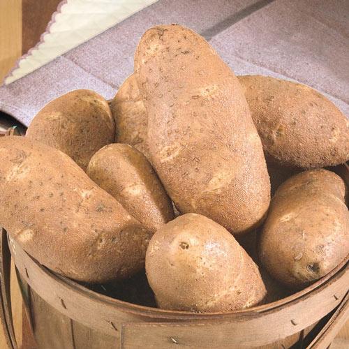Goldrush Potato