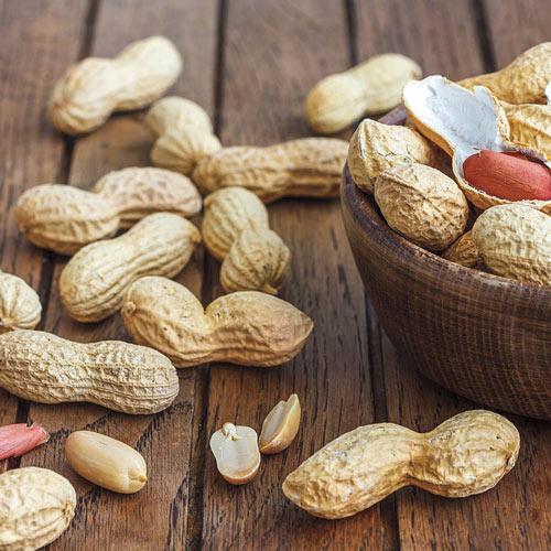 Bailey Virginia Peanut Seed