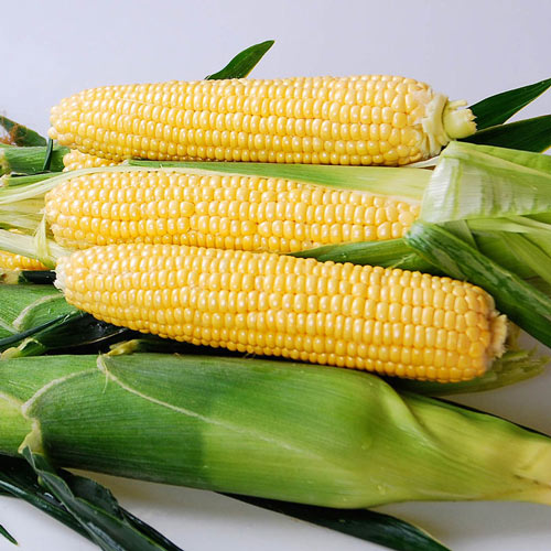 Yellowstone Hybrid Sweet Corn Seed (sh2)