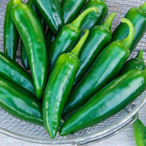 Gurney's<sup>®</sup> Primo II Jalapeno Hybrid Pepper