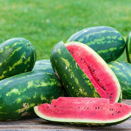 Sugar Momma Hybrid Watermelon
