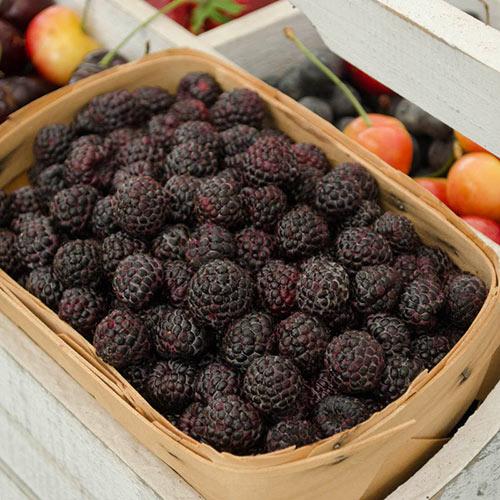Munger Raspberry