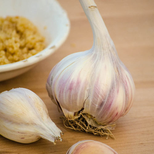 Music Hardneck Garlic