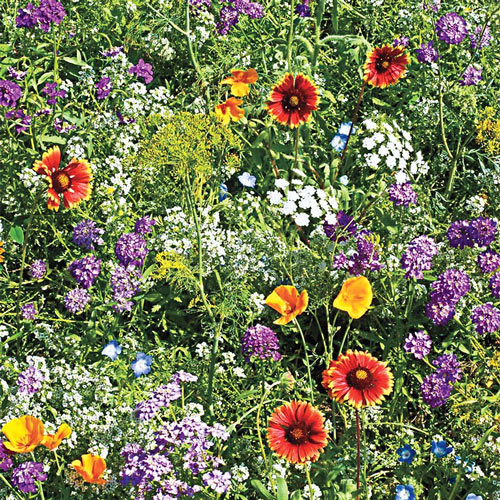 Gurney's<sup>®</sup> Beneficial Bug Wildflower Seed Blend