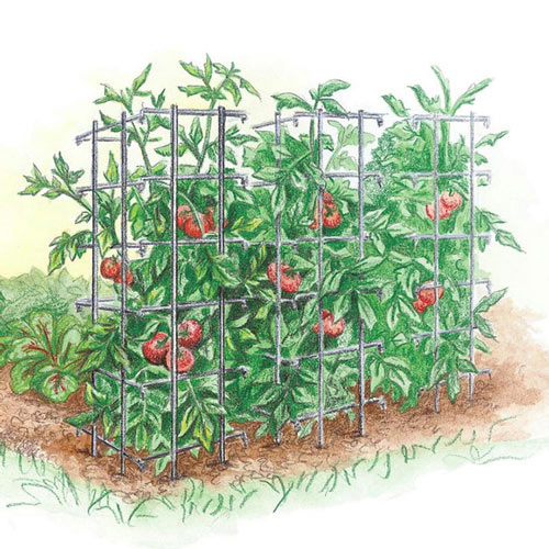 Tomato Cage - Plant Trellis
