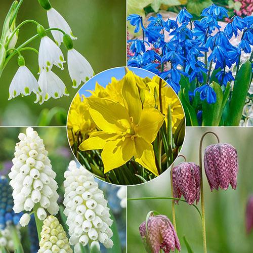 Pollinator Bulb Collection