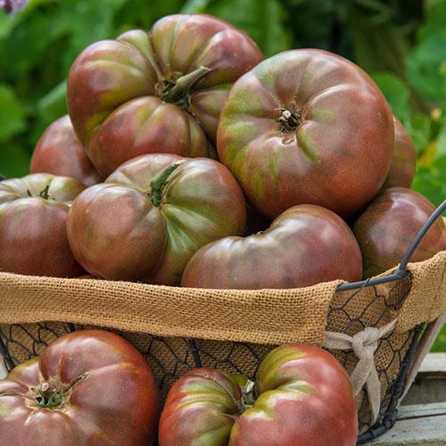 Cherokee Carbon Hybrid Tomato