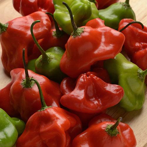 Mad Hatter Hybrid Hot Pepper