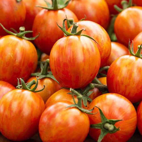 Sparky Cherry Hybrid Tomato