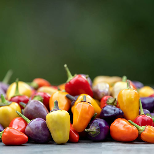Chinese Five-Color Hot Pepper