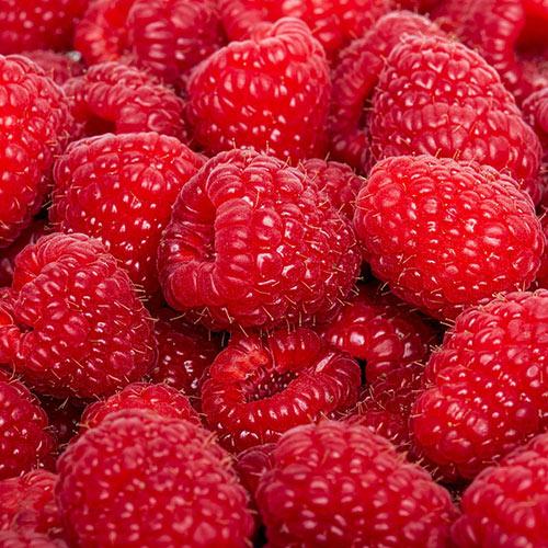 Kokanee Raspberry