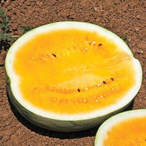 Orange Krush Hybrid Watermelon Seed