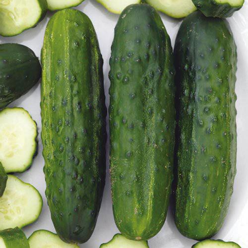 Sassy Hybrid Cucumber Seed