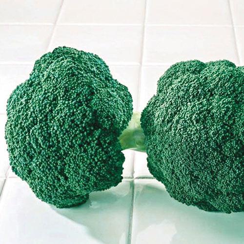 Destiny Hybrid Broccoli