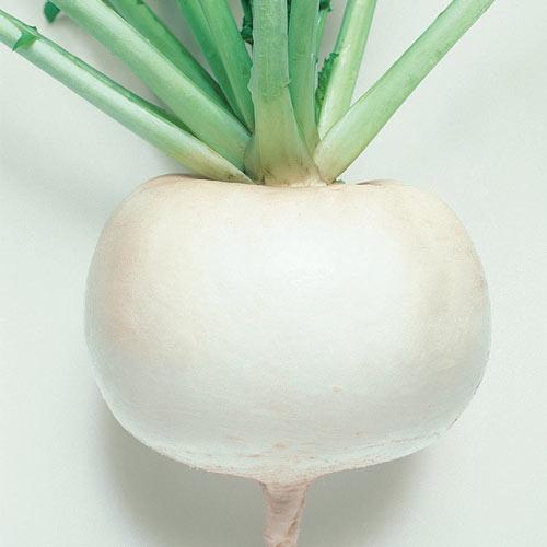 Just Right Hybrid Turnip Seed