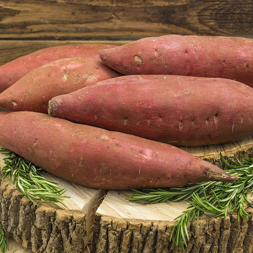 Covington Sweet Potato