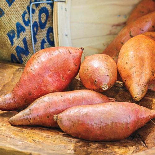 Vardaman Sweet Potato