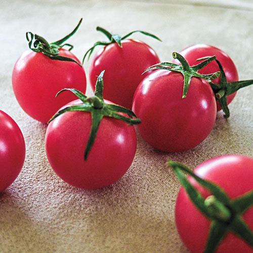 Sweet Treats Hybrid Tomato