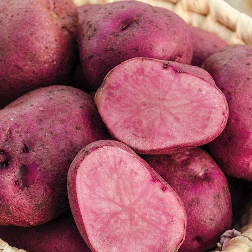 Mountain Rose Potato