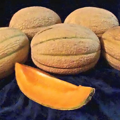 Hannah's Choice Hybrid Cantaloupe Seed