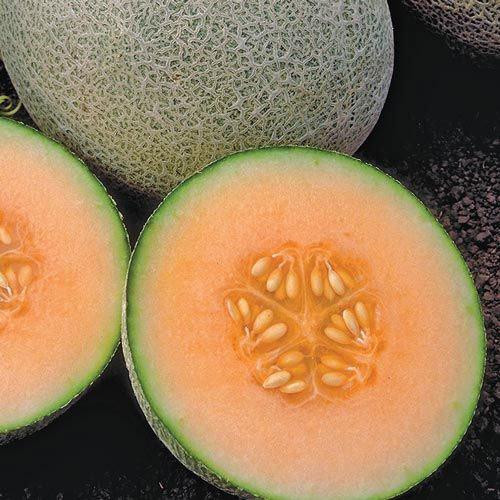 Ambrosia Hybrid Cantaloupe Seed