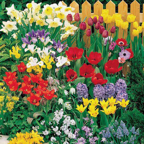 Wildflower Bulb Mix