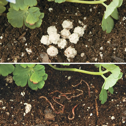 Encapsulated Earthworm Cocoons<sup>™</sup> - Beneficial Insects