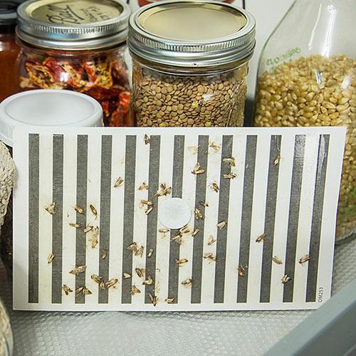 Cupboard Moth Traps™