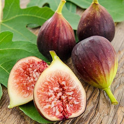 Improved Brown Turkey Fig Tree