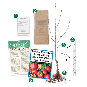 Reasons to buy Gurney's<sup>®</sup> Deluxe Fruit Trees