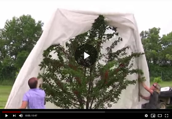 How to Install Tree Netting on Large Trees Video