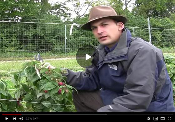 Primo Cane Raspberries Video