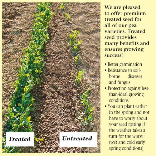 Untreated vs Treated Peas Seeds