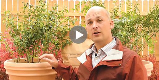 Blueberry Innovation Video