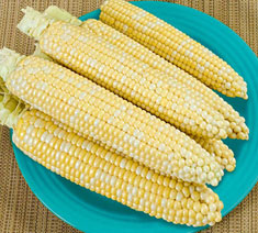 Picture of Super Sweet Hybrids Corn Type