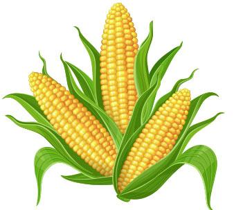 Story of Corn