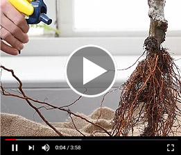 Dormant Trees Planting Guide Video