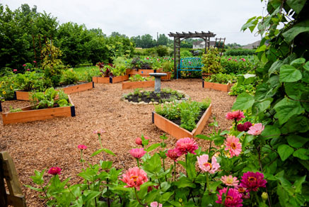 The raised bed garden, combining edibles and ornamentals