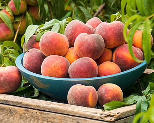 Peach and Nectarines