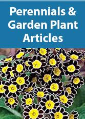 Perennials and Garden Plants Articles