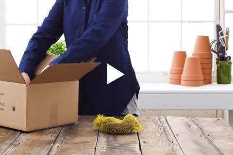 Asparagus - Planting Delayed