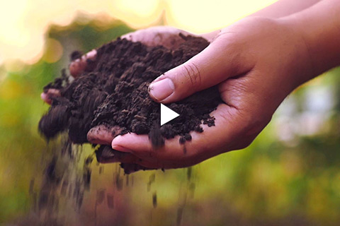 Bareroot Rose - Soil Amending