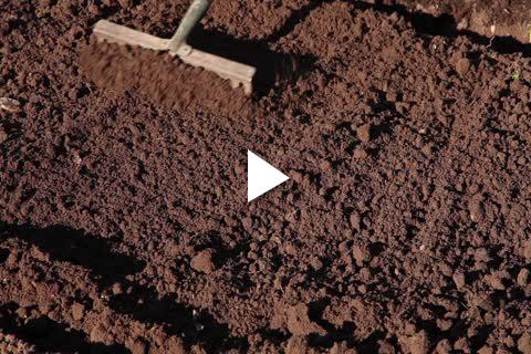 Hydrangea Potted - Site Prep