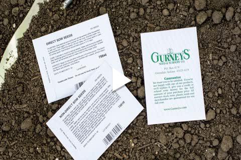 Non Direct Okra - Planting