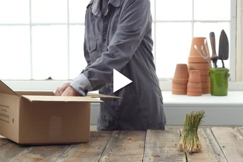 Onion Plants - Unboxing/Planting Delayed