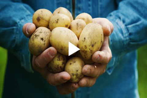 Potatoes - Planting Delayed