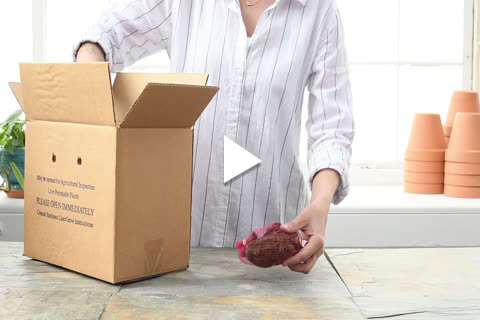 Rhubarb - Unboxing/Planting Delayed